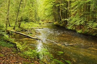 Grosser Regen (River), Near Bayerisch Eisenstein, Bavarian Forest, Bavaria, Germany, Europe by Jochen Schlenker