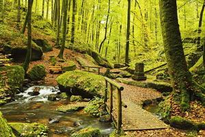 Karlstal Gorge, Near Trippstadt, Palatinate Forest, Rhineland-Palatinate, Germany, Europe by Jochen Schlenker
