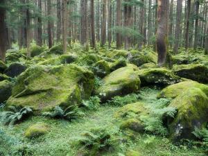Mossy Rocks, Reserve Forest, Manali, Himachal Pradesh State, India by Jochen Schlenker