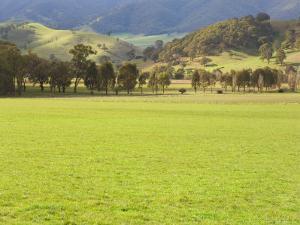 Pasture, Biggara Valley, Victoria, Australia by Jochen Schlenker