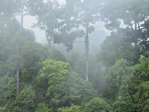 Rainforest, Sepilok Rainforest Discovery Center, Sabah, Borneo, Malaysia, Southeast Asia, Asia by Jochen Schlenker