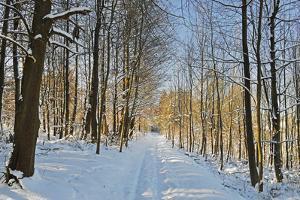 Rural Winter Scene by Jochen Schlenker