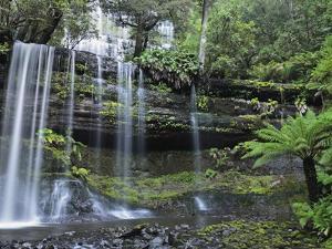 Russell Falls, Mount Field National Park, UNESCO World Heritage Site, Tasmania, Australia, Pacific by Jochen Schlenker