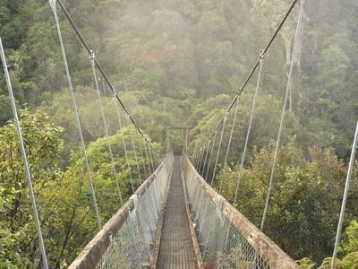 Swingbridge, Motu Falls, Motu, Gisborne, North Island, New Zealand, Pacific