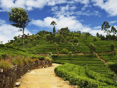 View of Tea Plantations from Lipton's Seat, Haputale, Sri Lanka, Asia by Jochen Schlenker