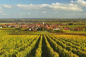 Vineyard Landscape and Maikammer Village, German Wine Route, Rhineland-Palatinate, Germany, Europe by Jochen Schlenker