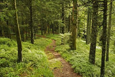 Walking Trail, Hochkopf, Near Schonau, Black Forest, Baden-Wurttemberg, Germany, Europe
