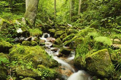 Windberg Waterfall, Near St. Blasien, Black Forest, Baden-Wurttemberg, Germany, Europe by Jochen Schlenker