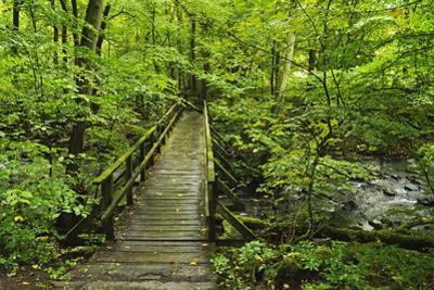 Wooden Bridge, Holzbachtal, Westerwald, Rhineland-Palatinate, Germany, Europe by Jochen Schlenker