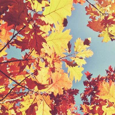 Looking up at Sky through Golden Autumn Leaves by Jodie Griggs