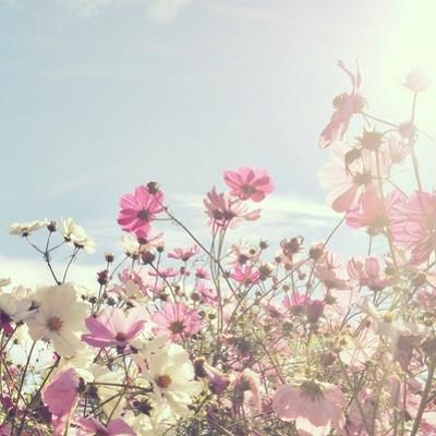 Sun Shining through Pink and White Flowers by Jodie Griggs