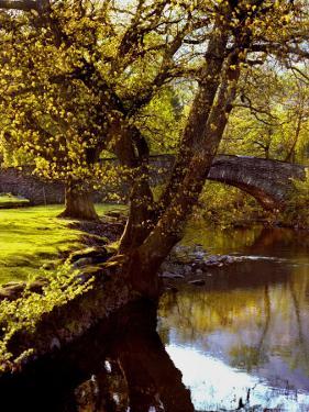 Cotswold Bridge by Jody Miller