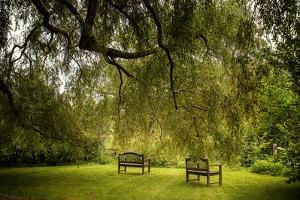 Rural Scene with Garden Benches under a Large Willow Tree by Jody Miller