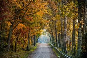 Rural USA with Trees in Autumn Along Track by Jody Miller