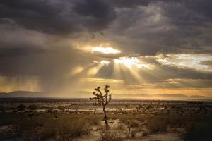 Sunlight on Desert Landscape in USA by Jody Miller