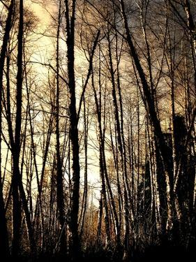 Winter Forest Light by Jody Miller