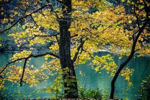 Yellow Leaves in the Fall by Jody Miller
