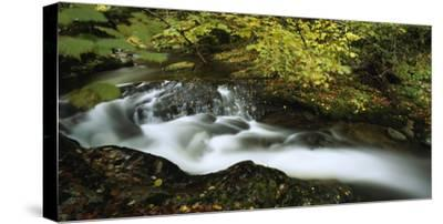 A waterfall and stream in the Bihor Mountains. by Joe Petersburger
