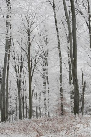 Frost Covering a Deciduous Forest in Hungary by Joe Petersburger