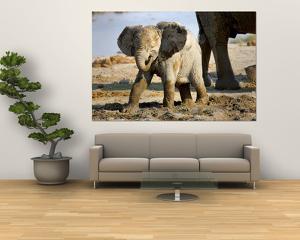 Baby African Elephant in Mud, Namibia by Joe Restuccia III