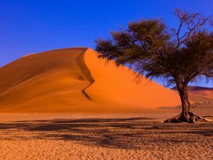 Flourishing Tree with Soussevlei Sand Dune, Namibia by Joe Restuccia III