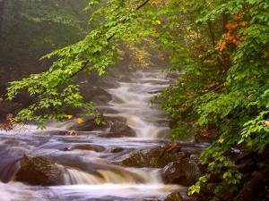 Flowing Streams Along the Appalachian Trail, East Arlington, Vermont, USA by Joe Restuccia III
