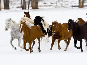 Running Horses on Hideout Ranch, Shell, Wyoming, USA by Joe Restuccia III