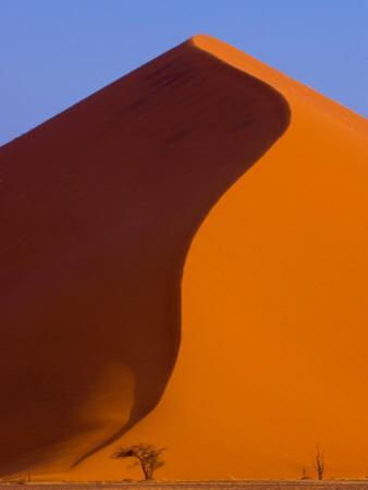 Tree and Soussevlei Sand Dune, Namibia by Joe Restuccia III
