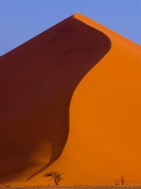 Tree and Soussevlei Sand Dune, Namibia by Joe Restuccia III
