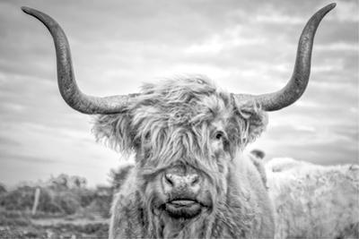 Highland Cows I by Joe Reynolds