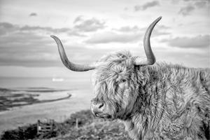Highland Cows IV by Joe Reynolds