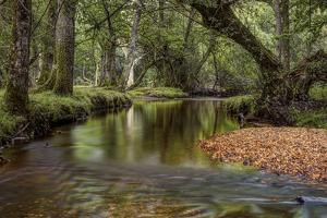 Lazy River by Joe Reynolds