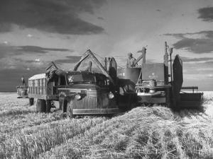 Combines and Crews Harvesting Wheat, Loading into Trucks to Transport to Storage by Joe Scherschel