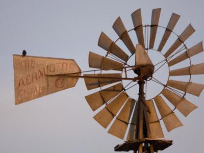 A Bird Perches on a Windmill at the Historical Steven's Creek Farm by Joel Sartore