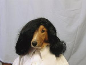 A Collie is Posed for a Humorous Photograph Wearing a Wig by Joel Sartore