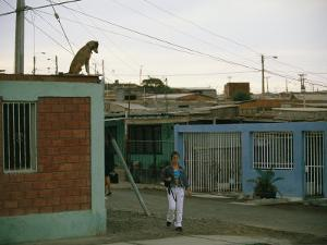 A Dog Watches Passersby from the Roof of an Arica House by Joel Sartore