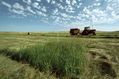 A Farmer Works around a Patch of Endangered Western Prairie Fringed Orchids