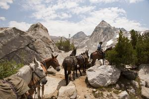 A Horse and Rider Lead a String of Pack Animals in King's Canyon National Park, California, USA by Joel Sartore