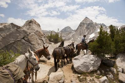 A Horse and Rider Lead a String of Pack Animals in King's Canyon National Park, California, USA