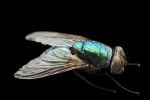 A Studio Portrait of a Fly in Lincoln, Nebraska. by Joel Sartore