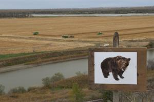 An Image of a Grizzly Bear in What Was Once Grizzly Bear Habitat by Joel Sartore