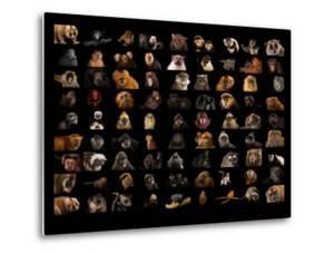 Composite of 90 Different Species of Primates by Joel Sartore