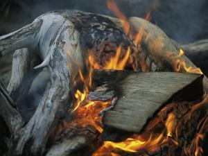 Driftwood Campfire, Clayoquot Sound, Vancouver Island by Joel Sartore
