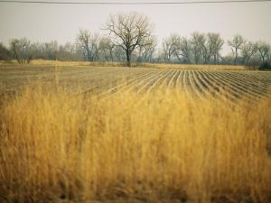Fields at the Lillian Annette Rowe Bird Sanctuary on the Platte River by Joel Sartore