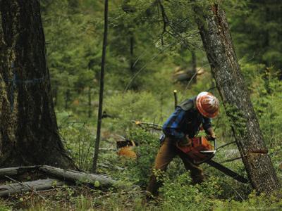 Logging Near Salmon, Idaho