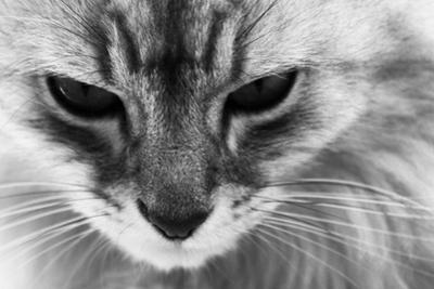 Cat by Joelle Icard