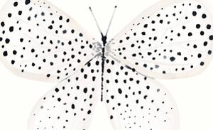 Flutterby Dance by Joelle Wehkamp