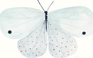 Flutterby Melody by Joelle Wehkamp