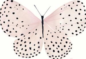 Flutterby Polka by Joelle Wehkamp