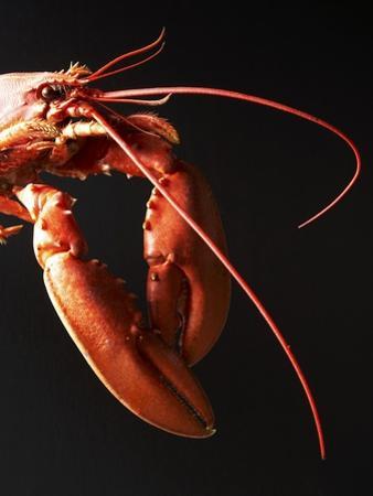 Cooked Lobster Against Black Background